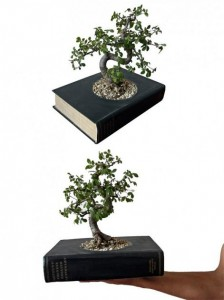 oud boek wordt plantenbakje