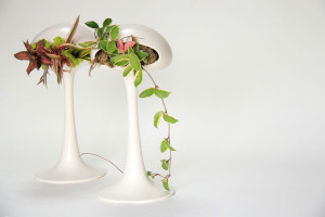 Keramieken plantenbakken