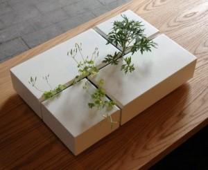 Plantenbak binnen