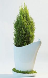 sweet pot plantenbak