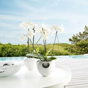 plantenbak voor orchidee