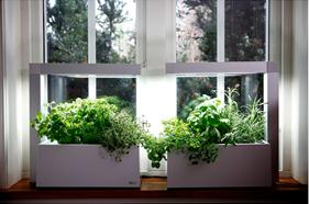 kruiden plantenbak herbie